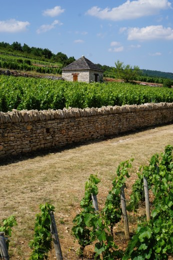 The wall between Montrachet and Chevalier La Cabotte