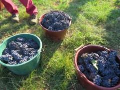 Gevrey 1er cru Combottes fruit. Nice eh ?