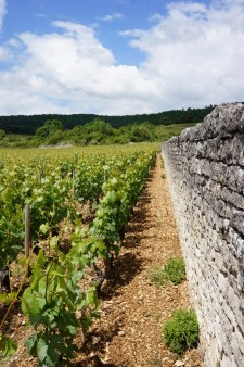 Left - Meursault-Perrières Dessous. Over the wall, Clos des Perrières. In the mid-ground scrub & trees - higher still, Meursault-Perrières de Dessus before the forest.