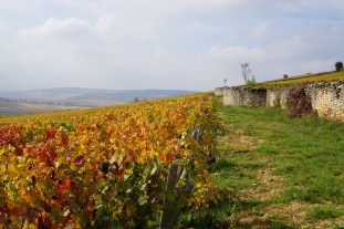 Walking in Corton...