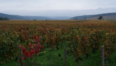 Towards Beaune from Aloxe...