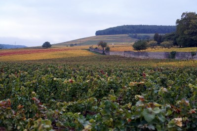 Towards Corton from Aloxe...