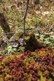 Succulents of Lavaux St.Jacques...