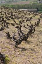 Old vines Fleurie