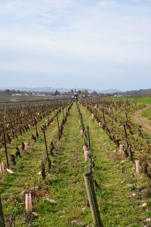 Volnay Caillerets