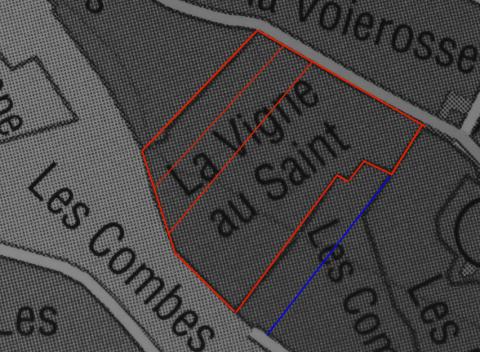 Dsc00461-vigne-au-saint
