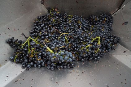 Whole clusters of Gevrey...