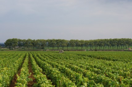 Clos des Epeneaux - from above...
