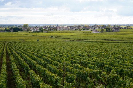 Across Garenne to Puligny...