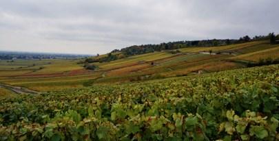 Over Fevres towards Bressandes and Grèves...