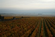 early morning volnay…