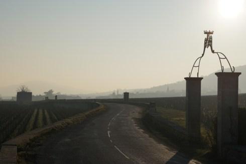Between Bâtard and Montrachet, towards Chassagne...