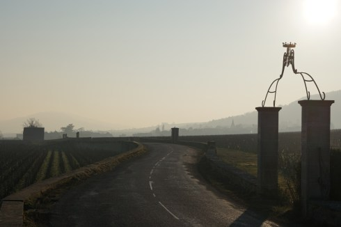 Between Bâtard and Montrachet, towards Chassagne...