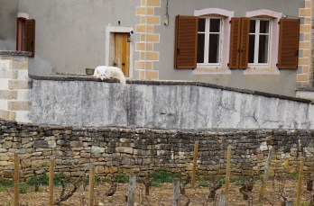 Guarding Pommard Village