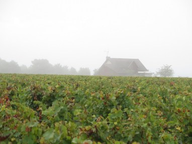 HCDN - Corner plot in early mist