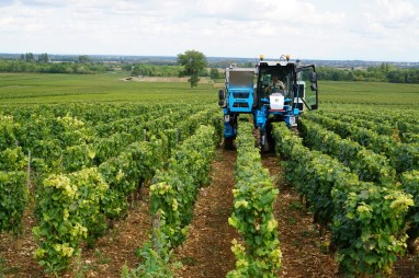 Meursault Les Charmes - machine harvesting!