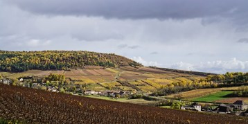 The St.Aubin vines on the hillside above Gamay