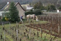The small patch of villages vines in front of Rousseau's cuverie...