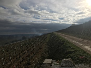 Looking south, towards Chambolle, from above the Clos des Lambrays...