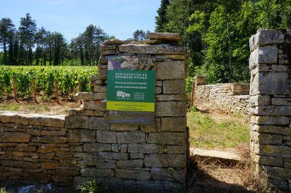 Newly (re)planted Hautes Côtes..