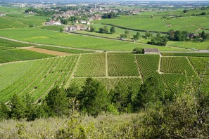 Above the 1ers looking towards Meursault - it's very close!