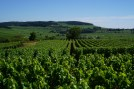 The view towards Monthélie from the whites next to Meursault...