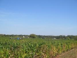 Bourgogne Rouge NE of MSD towards railway line