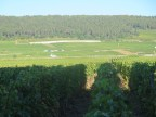 Chambertin from Roncevie woods edge 9.37 am