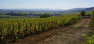 Towards Pommard over Clos des Mouches