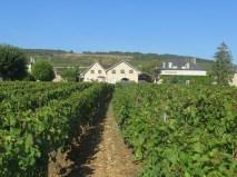 Vosne Village Ave du Monument plot looking towards Sirugue premises 11092018