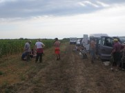 Arlaud Vendange Final morning SE of Village after Aligote to NE