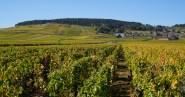Volnay starting to change colour - the hillsides are much greener south of here...