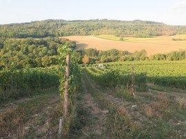 Top of slope Hautes-Cotes Chard 12092018
