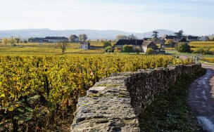 To Chassagne from over Bâtard & Criots...
