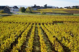 To Chassagne over Blanchots du Dessus...