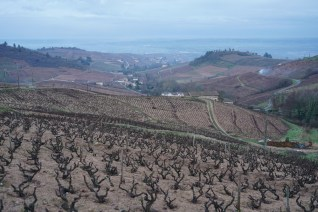 Above Fleurie
