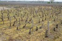 Herbicide - Volnay - Santenots de Dessous