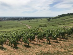 Over Beaune Bressandes (an excuse to pause while jogging!)