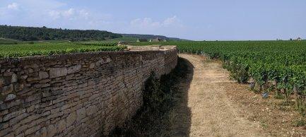 The wall of the Clos de Vougeot