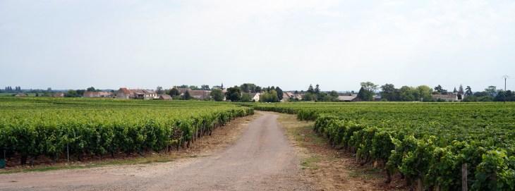 Week 30 2020 - Puligny