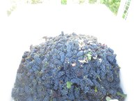 Echezeaux Fruit