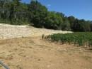Boillot Puligny Clos de la Mouchere vines