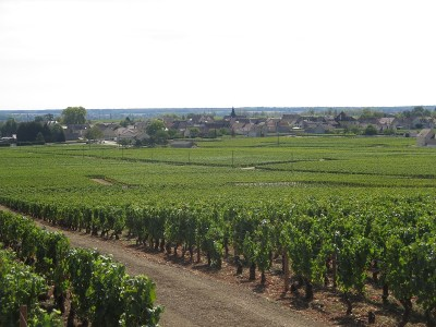 View to Puligny over vines