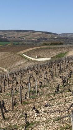 Today - Chablis Moutonne