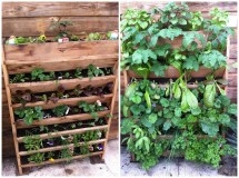 Category Vertical Gardening - Burlington Garden Center