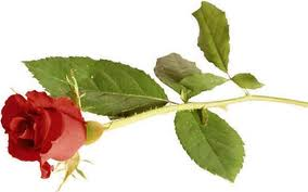 Will roses be thrown for a Bravo! Performance when BPAC present their budget and business plan?