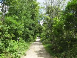 One of the Mt. Nemo walking trails – but how much traffic can these trails take and still be seen as a quiet walk in the country.