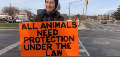 Pig protester killed