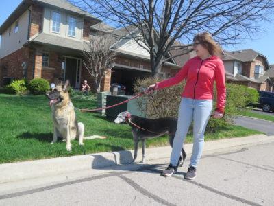 Dog walker - 2 dogs