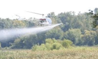 aerial spraying gypsy moth